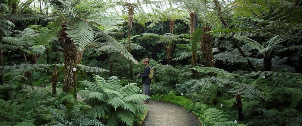 massive ferns