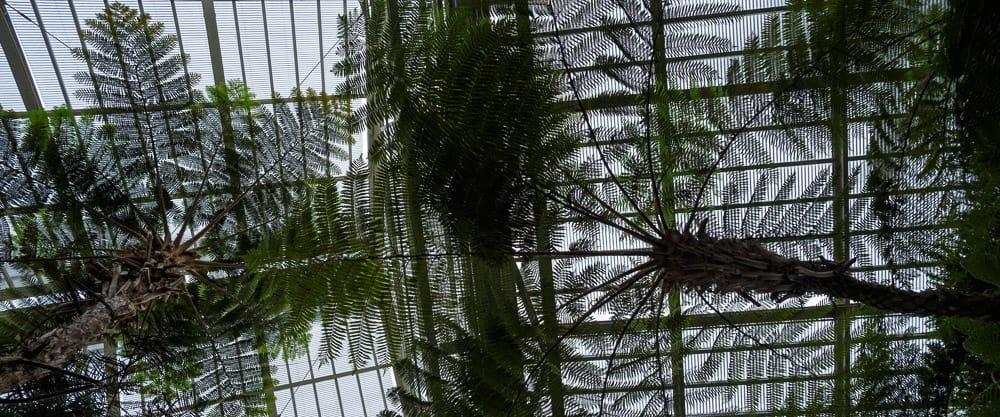 massive ferns from below