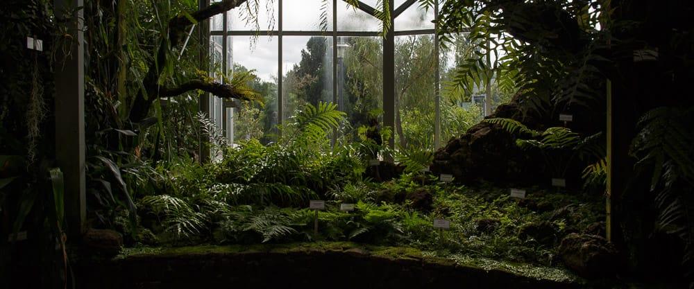 green shrubs behind glass