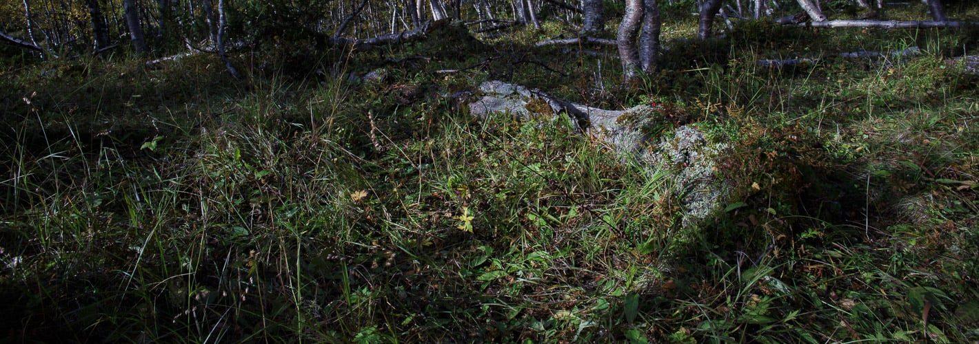 Microworld 7.1 — Fallen tree